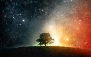 arbol y estrellas despertar