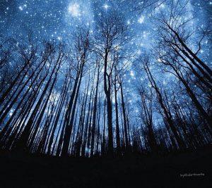 árboles u estrellas